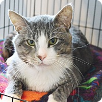 Adopt A Pet :: Hamilton - Lincoln, NE