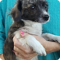 Adopt A Pet :: !  Lilly - Colton, CA