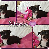 Adopt A Pet :: Nicole - Spring Valley, NY