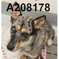 Adopt A Pet :: Georgia - Bernardston, MA