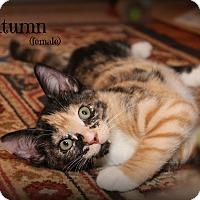 Adopt A Pet :: Autumn - Glen Mills, PA
