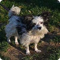 Adopt A Pet :: Sophie - Akron, OH