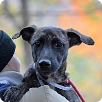 Adopt A Pet :: Anniston Price - Brooklyn, NY