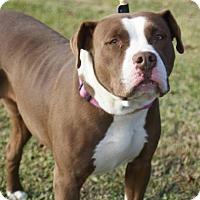 Adopt A Pet :: Layla - Kinston, NC