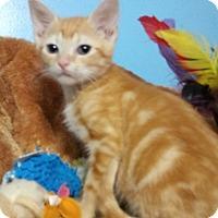 Adopt A Pet :: Pumpkin - Hallandale, FL