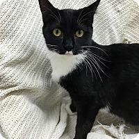 Adopt A Pet :: Aleerah - Paducah, KY