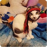 Adopt A Pet :: Ash - Cerritos, CA