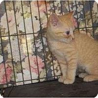 Adopt A Pet :: Patter - McDonough, GA
