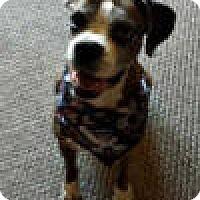 Adopt A Pet :: Baby Girl - Sunderland, MA