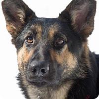 Adopt A Pet :: Karma - Wayland, MA