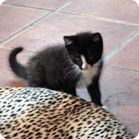 Adopt A Pet :: Flori - Speonk, NY