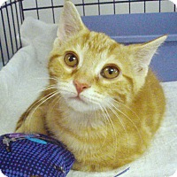 Adopt A Pet :: Freddie - Germansville, PA