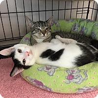 Adopt A Pet :: Charlie - Atco, NJ