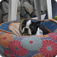 Adopt A Pet :: Bobo - San Francisco, CA