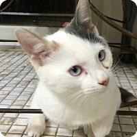 Adopt A Pet :: Bunny - Island Park, NY