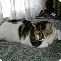 Adopt A Pet :: CallieAnnCP - Carlisle, PA