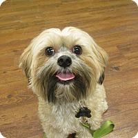 Adopt A Pet :: Max - Lake Odessa, MI