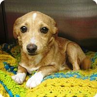 Adopt A Pet :: Coco - Redding, CA