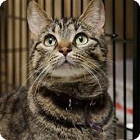 Adopt A Pet :: Sandra - Medford, MA