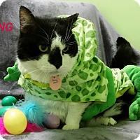 Adopt A Pet :: Fleming - Muskegon, MI