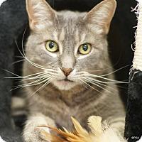 Adopt A Pet :: Harley - East Hartford, CT