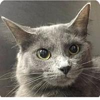Adopt A Pet :: Rachel - Springdale, AR