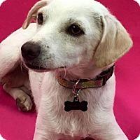 Adopt A Pet :: Wenxi - Alta Loma, CA