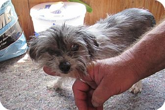 Chinese Crested Dog for adoption in Walthill, Nebraska - Coco