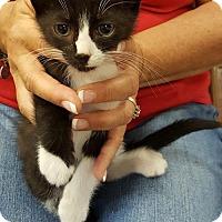 Adopt A Pet :: Harliquin - Melbourne, FL
