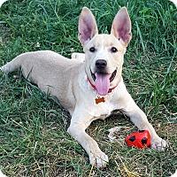 Adopt A Pet :: Jones - Elyria, OH