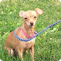 Adopt A Pet :: Tinkerbell - Buffalo, WY