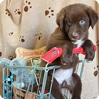 Adopt A Pet :: Melbourne - Foster, RI