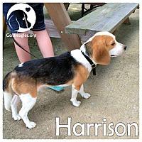 Adopt A Pet :: Harrison - Novi, MI