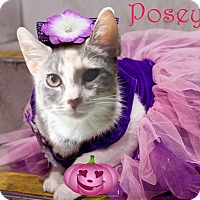 Calico Kitten for adoption in East Brunswick, New Jersey - Posey