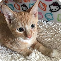 Adopt A Pet :: CLIFFORD - Fountain Hills, AZ