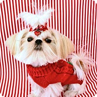 Adopt A Pet :: Buddah - Atlanta, GA