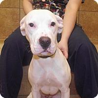 Adopt A Pet :: Sabrina *Petsmart GB* - Appleton, WI