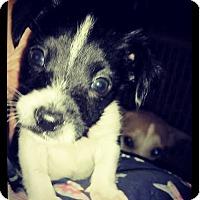 Adopt A Pet :: Maddox - Grand Bay, AL