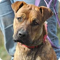 Adopt A Pet :: Bane- SPONSORED - Lisbon, OH