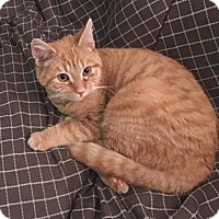 Adopt A Pet :: Rusty - New Milford, CT