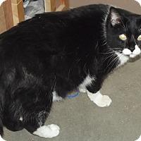 Adopt A Pet :: Raya - Cheboygan, MI