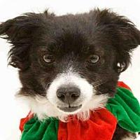 Adopt A Pet :: SHELIA - Orlando, FL