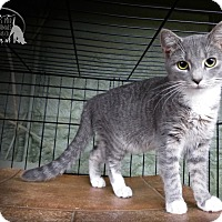 Adopt A Pet :: Lana - Marlinton, WV