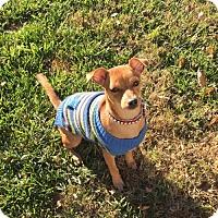 Adopt A Pet :: Harmony - Santa Clarita, CA