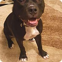 Adopt A Pet :: Onix - Pending Adoption - Lancaster, PA