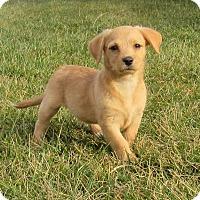 Adopt A Pet :: Nadya - New Oxford, PA
