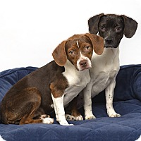 Adopt A Pet :: Janie and Carrie - Westfield, NY