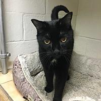 Adopt A Pet :: Aaron - Saylorsburg, PA