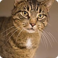 Adopt A Pet :: Maurice - Grayslake, IL