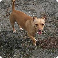 Adopt A Pet :: Franz - Tumwater, WA